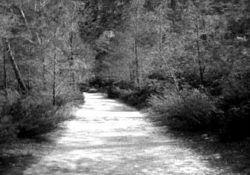 Camino-blackwhite